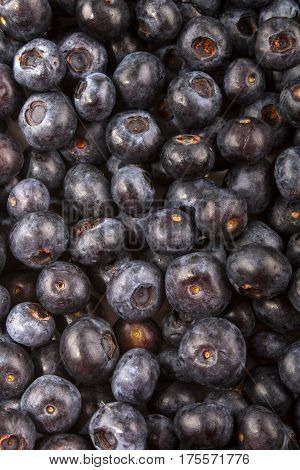 organic blueberries also to use as background