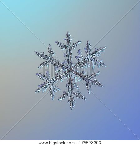 Macro photo of real snowflake: big snow crystal of stellar dendrite type with traditional shape, six long, ornate arms with many side branches and fine symmetry, glittering on smooth blue - gray gradient background.