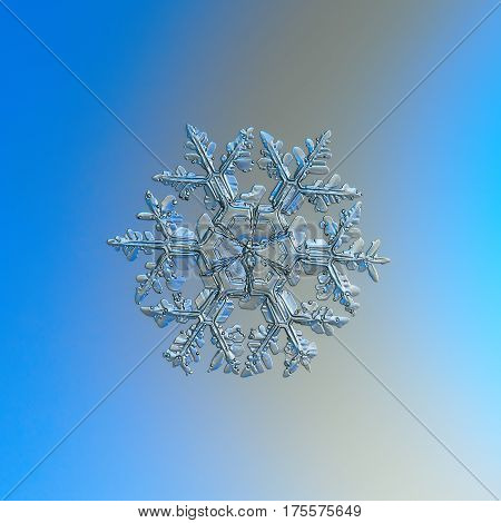 Macro photo of real snowflake: large snow crystal of stellar dendrite type with long, ornate arms, many side branches and frozen bubbles of rime, and massive central hexagon, divided by six sectors. Snowflake glittering on bright blue - gray gradient back
