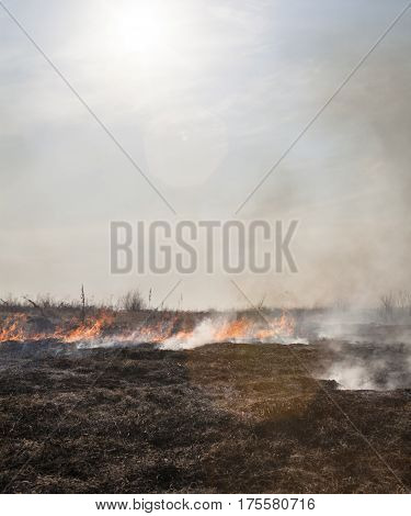 Fire in the field. Burnt smoking grass in the foreground.