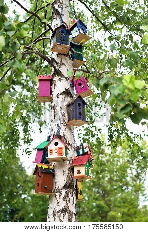 Many colorful little birdhouses hanging on a green tree