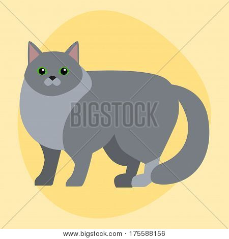 Cat breed siberian cute pet portrait fluffy gray adorable cartoon animal and pretty fun play feline sitting mammal domestic kitty vector illustration. Beautiful posing playful paw design.