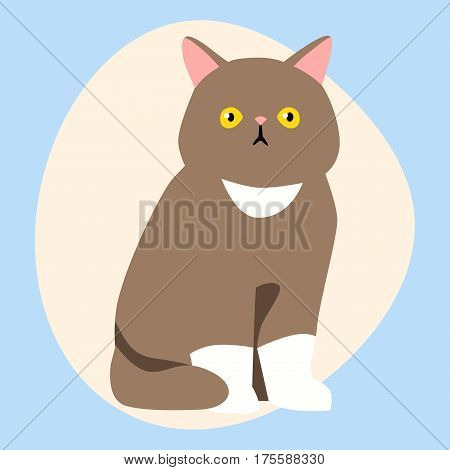 Cat breed cute pet brown fluffy young adorable cartoon animal and pretty fun play feline sitting mammal domestic kitty vector illustration. Beautiful posing playful paw design.