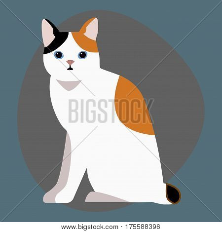 Cat breed cute pet portrait fluffy white black red adorable cartoon animal and pretty fun play feline sitting mammal domestic kitty vector illustration. Beautiful posing playful paw design.