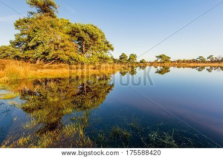 Colorful landscape reflected in the mirror-smooth water surface of a small fen in the Netherlands on a sunny and windless day in the fall season.