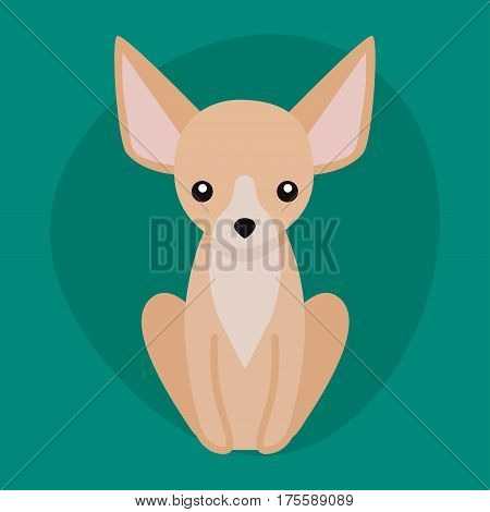 Funny cartoon dog character bread illustration in cartoon style happy puppy and chihuahua isolated friendly mammal vector illustration. Domestic element flat comic adorable mascot canine.