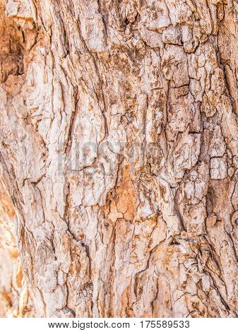 wood background and texture - high quality picture