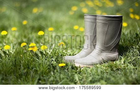 Springtime and gardening concept - wellington boots and dandelion flowers in the grass