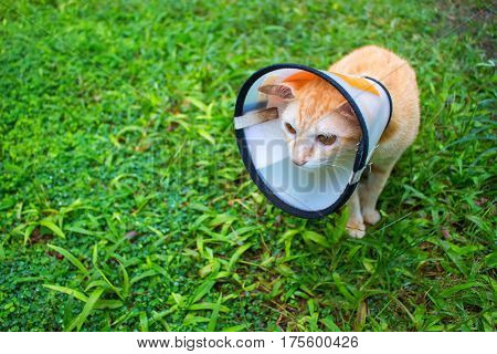 Sick cat in protective collar on green grass. Injured cat photo. Veterinary post-operation care for domestic animal. Protection cover on pet head. Depressed kitten in medical collar. Vet clinic visit