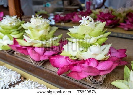 Buds of lotus or Nelumbo nucifera as offering in buddhistic shrine