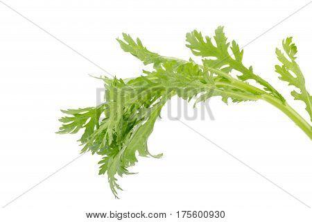 Chrysanthemum coronarium Isolated on a white background