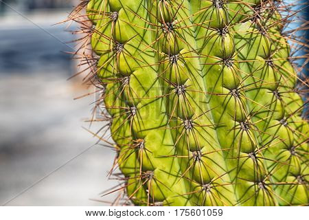 Abstract Leaf Of Cactus Plant And  Light