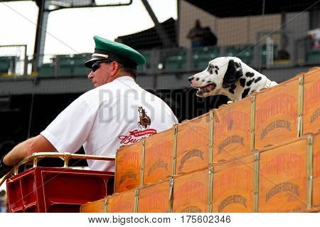 SCOTTSDALE, AZ-MAR 6: The Budweiser dalmation before the game between the Arizona Diamondbacks and the Oakland Athletics at Salt River Fields at Talking Stick on March 6, 2014 in Scottsdale, Arizona.
