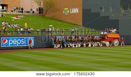 SCOTTSDALE, AZ-MAR 6: Clydesdales before the game between the Arizona Diamondbacks and Oakland Athletics at Salt River Fields at Talking Stick on March 6, 2014 in Scottsdale, Arizona.