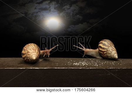 Two snails against the background of the night sky with the moon