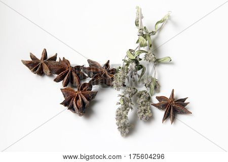 Star anise spice fruits and mint isolated on white background