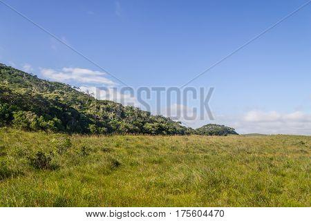 Fortaleza Canyon Vegetation