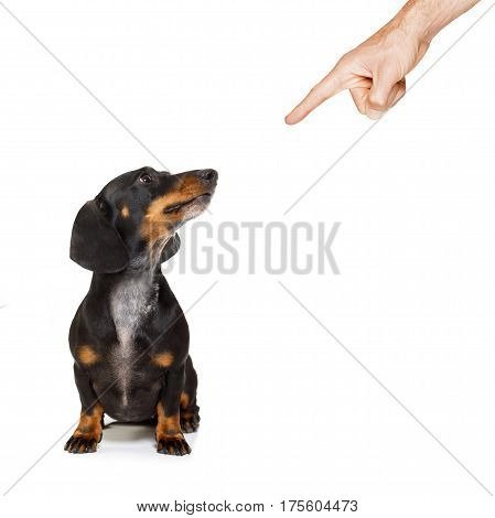 Owner Punishing His Dog