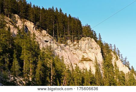 beautiful view of the mountains from the bottom up, decorate fir slope, blue sky, sunny evening,