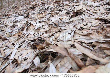 Background Texture Of Fallen Leaves In A Forest, dry leaves fallen on ground