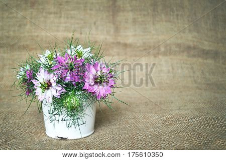 Bouquet of nigella sativa on canvas background