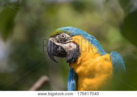 Portrait of parrot that beautiful Avian .