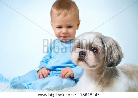 Eight month baby sitting and looking on shih tzu dog. Focus on dog.