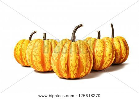 Five red striped pumpkins isolated on white background