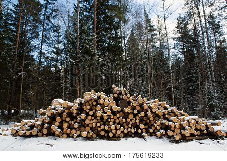 Laid the Felled trunks of trees prepared for export in the forest winter. Stacked in stacks of sawn forest covered with snow. Industrial logging of pine trees. Nature is used by people.