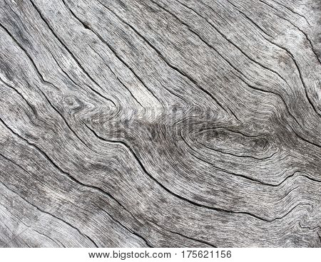 Silver wood background. Wooden texture close up photo. White old tree near the sea. Curves and lines on rustic timber. Rough timber texture. Sea wood backdrop. Grey old tree on the beach