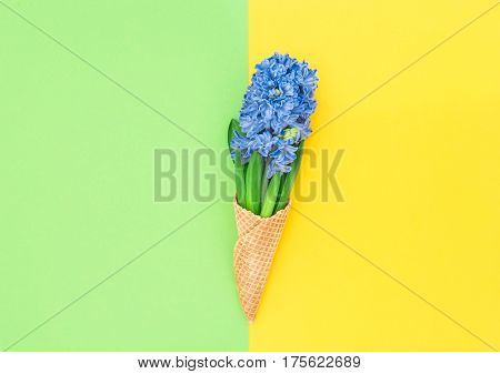 Hyacinth flowers in ice cream waffle cone on colorful background. Spring concept