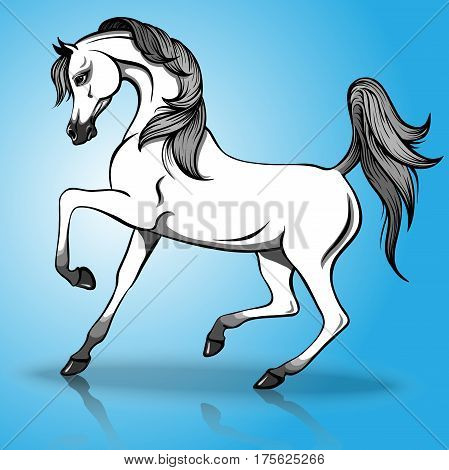 Vector illustration of beautiful arabian horse on a blue background