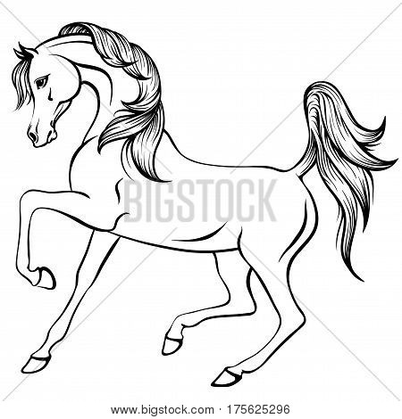 Vector outline illustration of beautiful arabian horse