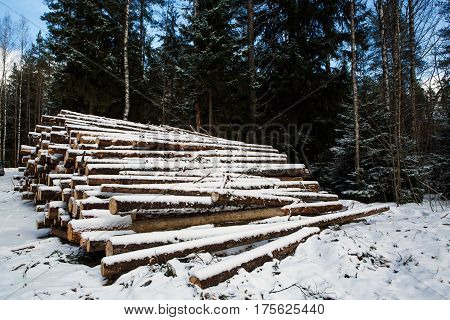 Laid trunks of trees prepared for export in the winter season. Stacked in stacks of sawn forest covered with snow. Industrial logging of pine trees. Nature is used by people.