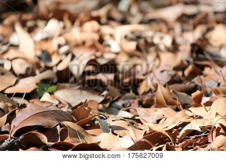 Forest Floor with soft focus background 2