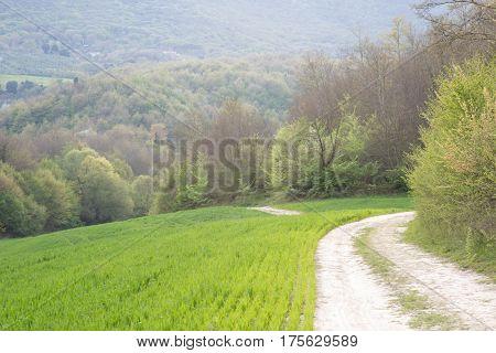 Dirt path that runs along a corn field