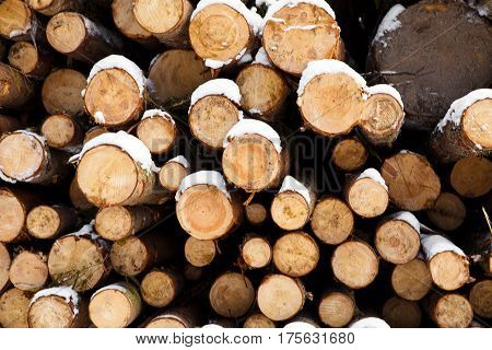 Trunks of pine trees in winter forest. Stacked in stacks of sawn forest covered with snow. Industrial logging of pine trees. Nature is used by people.