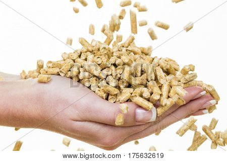 hand with pellets as old natie energy