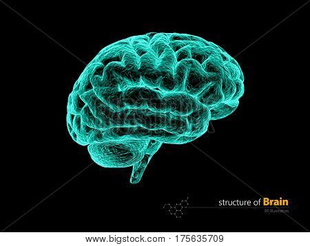 Human brain x-ray, anatomy structure. Human brain anatomy 3d illustration.