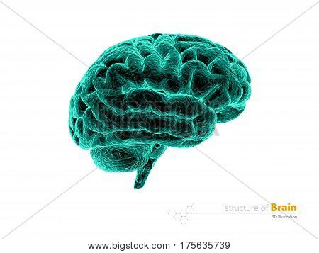 Human brain x-ray, anatomy structure. Human brain anatomy 3d illustration. isolated withe
