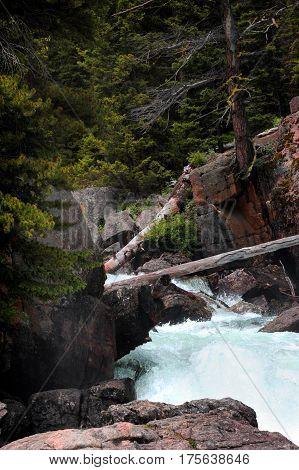 Fallen Logs Across Lake Creek