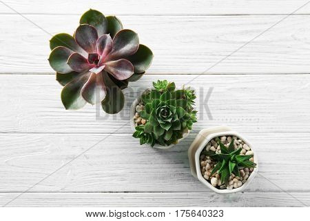 Houseplants on white wooden background