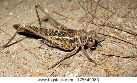 Grasshopper locust insect animal night macro photo
