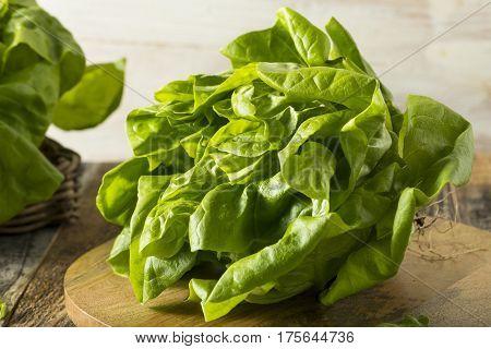 Raw Green Organic Boston Butter Lettuce