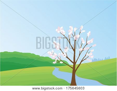 Cherry tree in spring landscape - Illustration