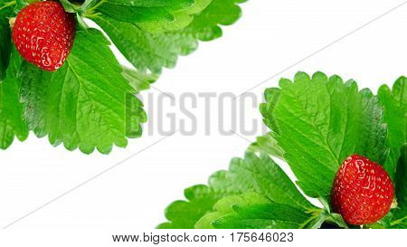 Strawberry and leaves isolated on white background. Strawberry flavor and fragrance are popular, Strawberry are used widely in a variety of manufacturing, including beverages, foods, confections, perfumes and cosmetics. poster