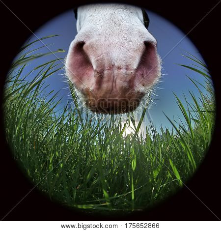 Horse muzzle surrounded by meadow grass shot ultra-wide lens. Collage.