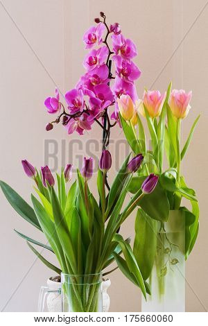 Bouquet Of Spring Flowers, Purple, Pink Tulips And Phalaenopsis.