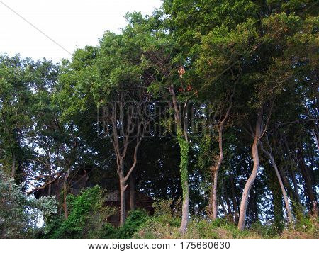 Trees in the magic forest wood photo