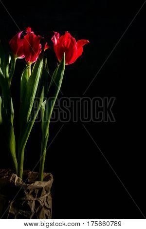 Red And Scarlet Tulips On A Black Background. Lots Of Space For Text.
